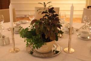Live plant wedding centerpiece